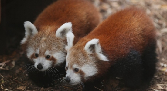 Philly Red Panda Cubs Named; One Dead AC Expressway Crash; Homeless Vet Dies 8 Months After Attack