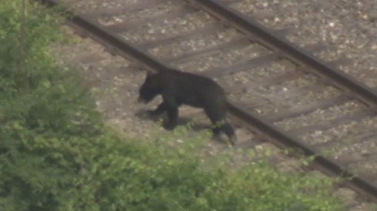 Black Bear Seen in East Falls; Woman Stabbed/Killed in Fight; Target Peeping Tom Charged